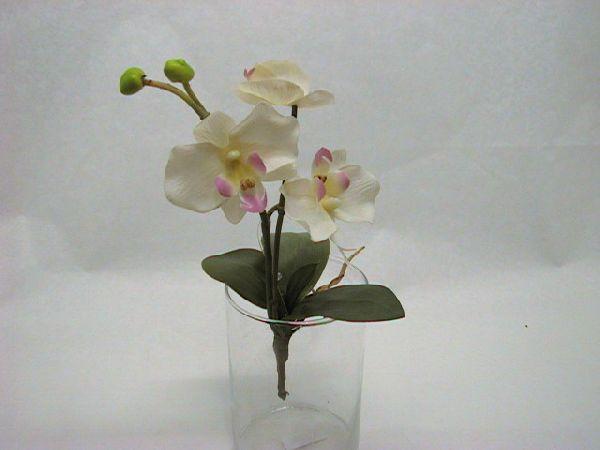 Seidenphalaeonopsis x3 WEISS        30cm