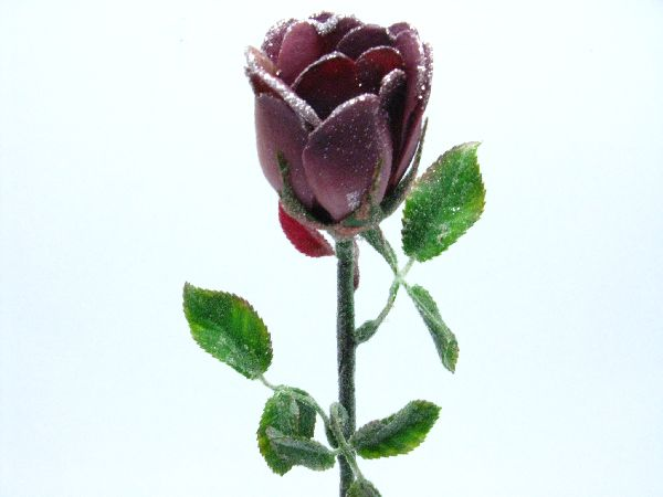 Rose m.Silberglitter AMETHYST H54*6cm
