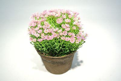 Alysum (Steinkraut) FARBL. rosa 12cm 84 Blüten