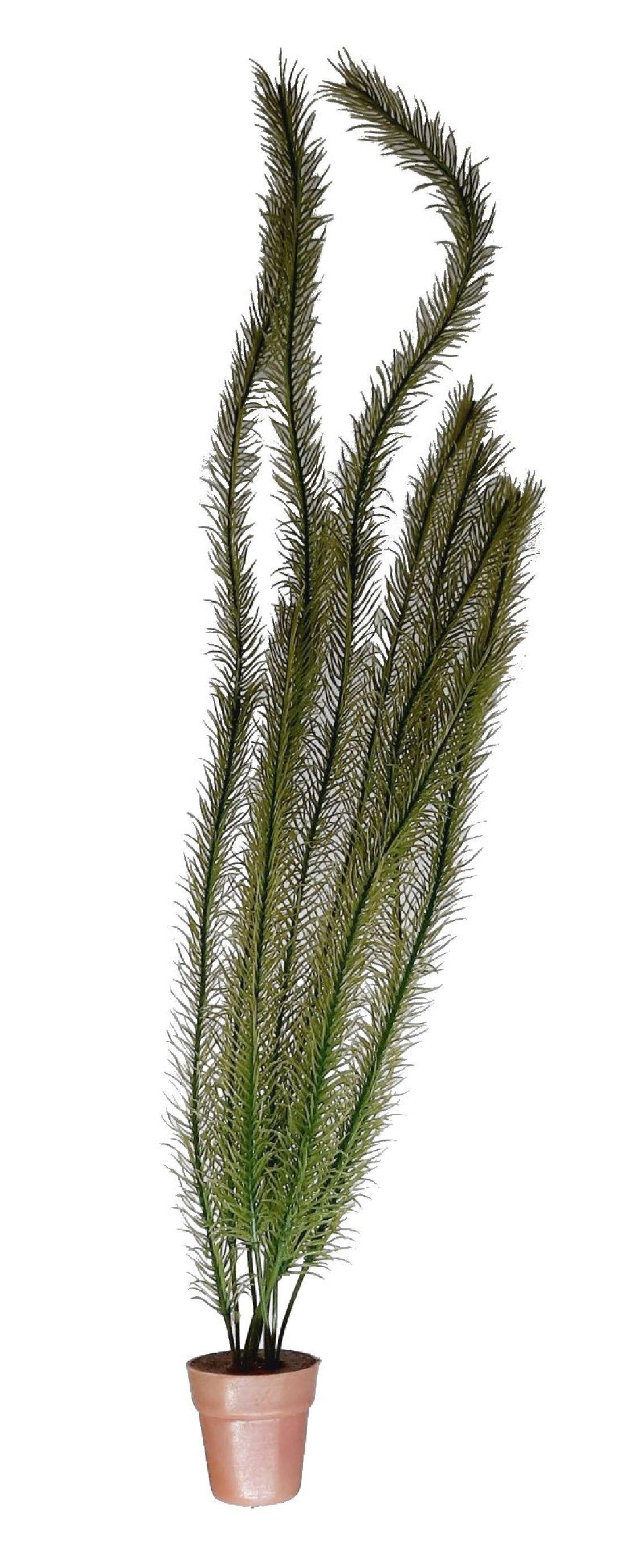 Wasserpflanze Asparagus GRUEN *4/50cm