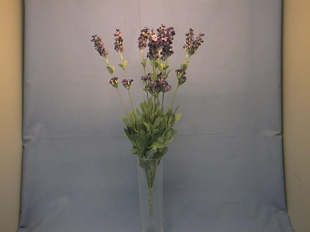 Lavendel x12 LAVENDEL     35cm