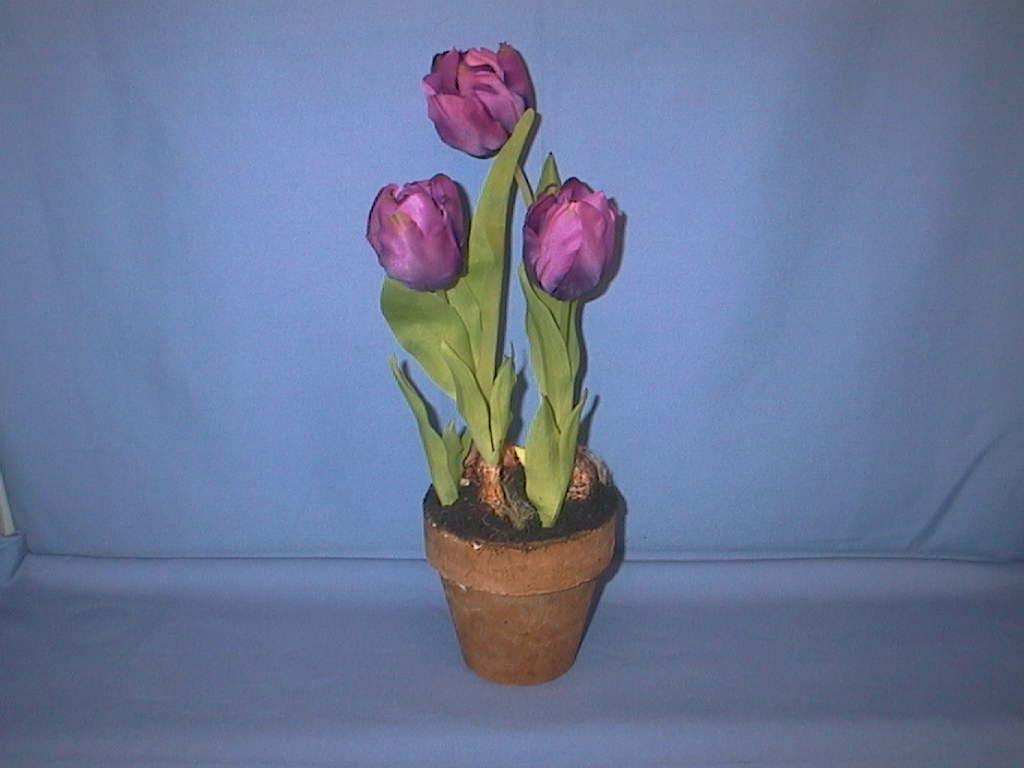 Tulpe i.Topf x3 LILA         25cm
