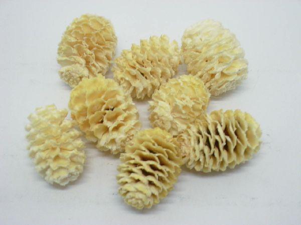 Sabulosum - Zapfen GEBLEICHT 1 kg