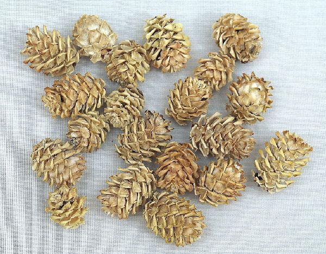 Salignum - Zapfen BEUTEL - Natur 1 kg