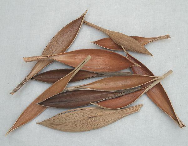 Cocosschale-Blatt SPARPACK- SK 1,5kg ca.200St. mini