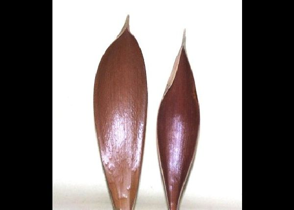 Cocosschale-Blatt NATUR 20-30cm 10 Stück
