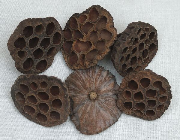 Lotuskolben SPARPACK- SK 6-8 cm