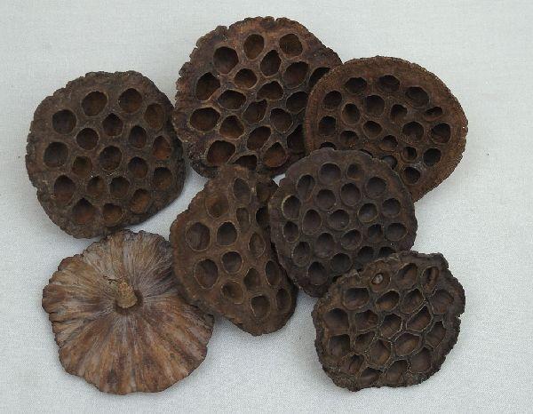 Lotuskolben SPARPACK- SK 8-10 cm