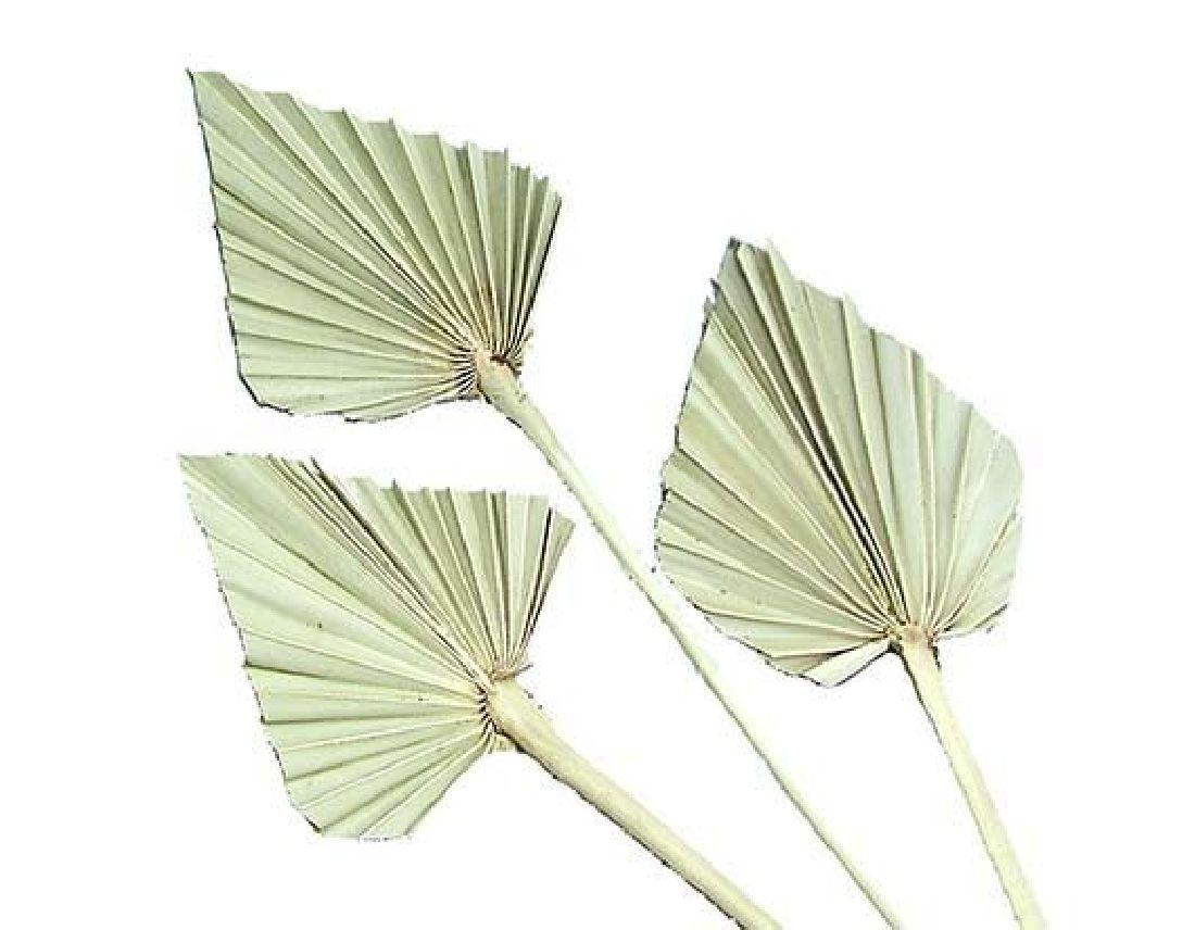 Palmspear SPP-natur 100St.