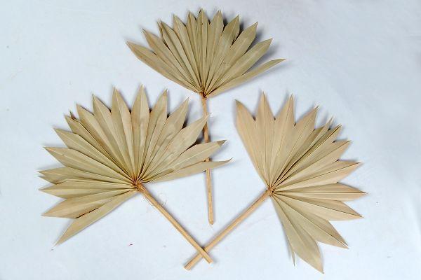 Palmspear NATUR Sonne 100St.