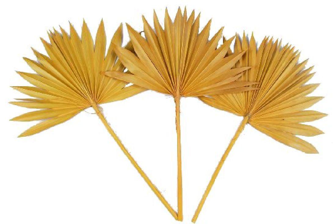 Palmspear GELB 39 Sonne 50St.