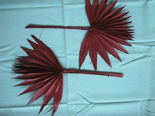 Palmspear ROT 11 Sonne 50St.