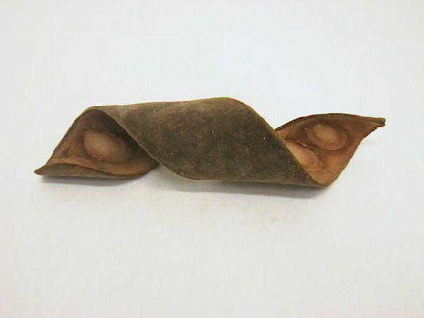 Leiterschote (Machete) NATUR  15 - 20 cm 1St. geringelt (Velvet Bean)
