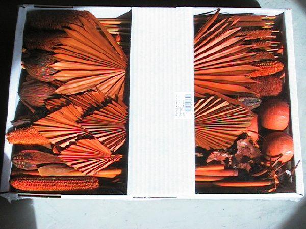 Exoten Sortiment ORANGE-mango 54 Collection ca. 125 Teile
