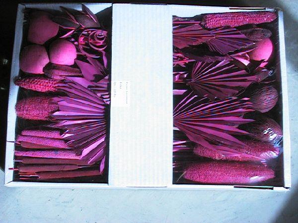 Exoten Sortiment azalee 67 Collection ca. 125 Teile