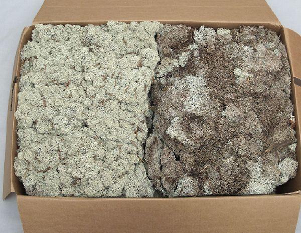 T.-Moos (Islandmoos) NATUR ca. 3 kg Schwedenmoos