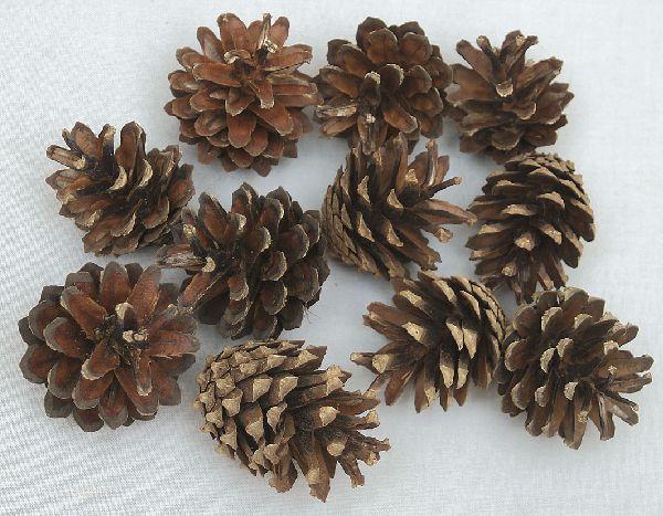 Kiefer Zapfen NATUR 00 5 kg Pinus Silvestris