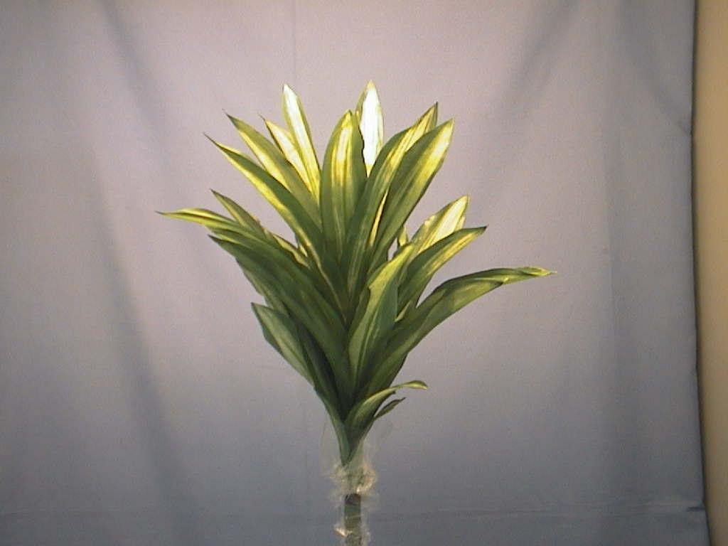 Seidenblumen GRÜN-Dracaene einzelstiel