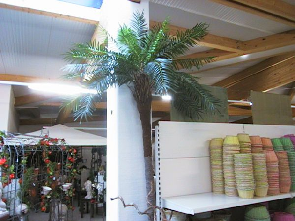 Phönix-Palme GRÜN 300cm