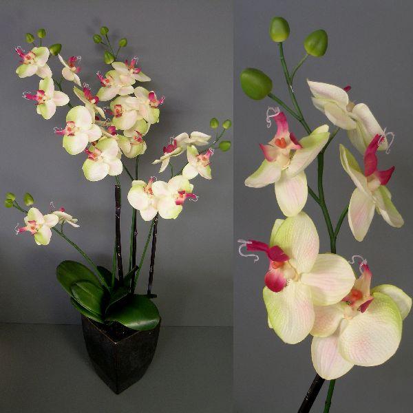 Phaleonopsis HELLGRÜN 80cm