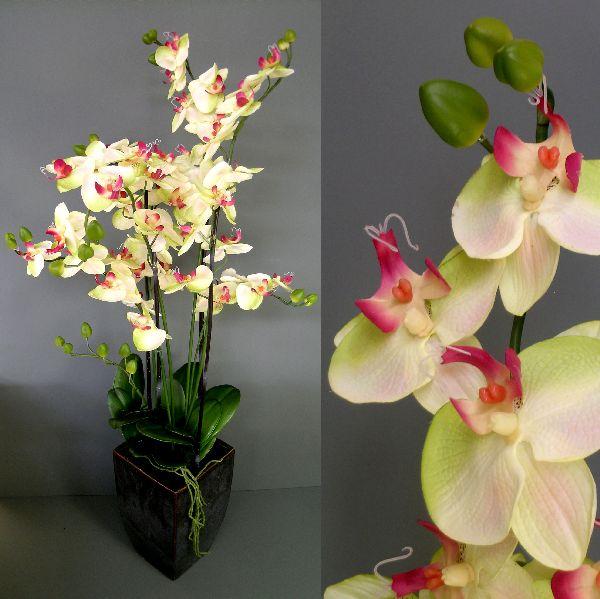 Phaleonopsis HELLGRÜN 100cm