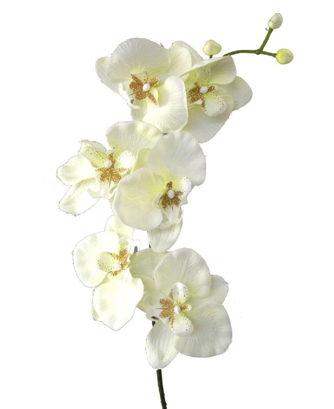 Orchideenzweig 33538 CREME 48 78cm