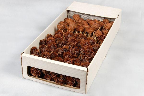 Cedar Rose NATUR am Stiel 100 Stück