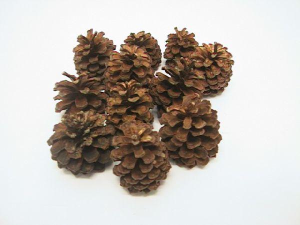 Bergkiefer Zapfen NATUR 2 kg ca. 4-5 cm