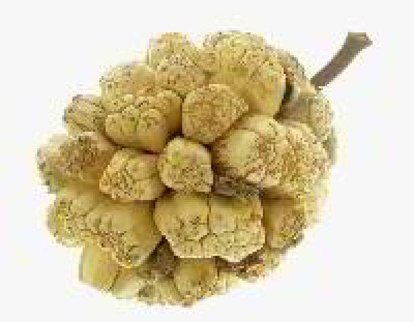 Brain Fruit GEBLEICHT 30x20cm
