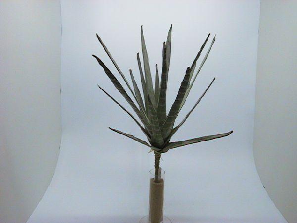 Zier-Aloe Vera GRÜN 35cm