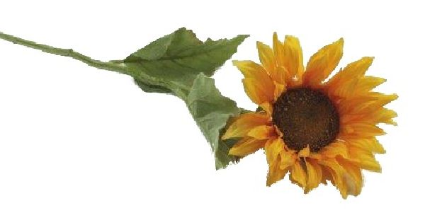 Sonnenblume GELB 14666/02579 12cm  L=60cm