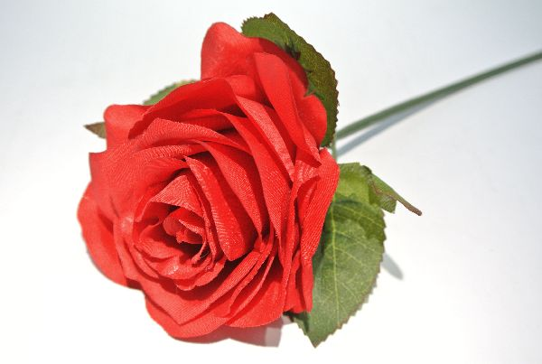 Rose Lisa 13661 ROT 500 6 cm mit 23cm Stiel