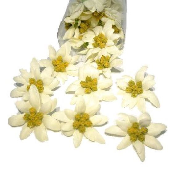Edelweiss Blüte CREME 14670  / Kopf Ø 5-6 cm