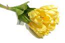 Tulpen GELB 200 30cm 15St.Btl.