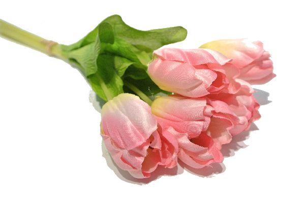 Tulpen ROSA 480 30cm 15St.Btl.