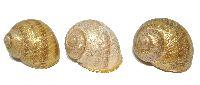 Schnecke Ring GOLD-NATUR 7418 GINA