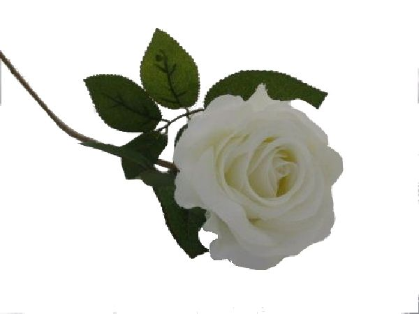 Rose Marissa WEISS 14606 10 Ø7,5cm L=40cm