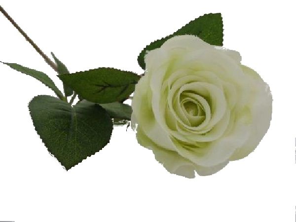 Rose Marissa WEISS-GRÜN 14606 108 Ø7,5cm L=40cm