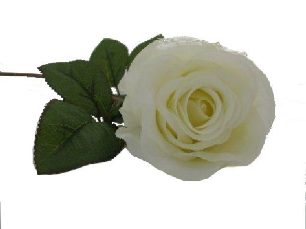 Rose Marissa CREME 14606 15 Ø7,5cm L=40cm