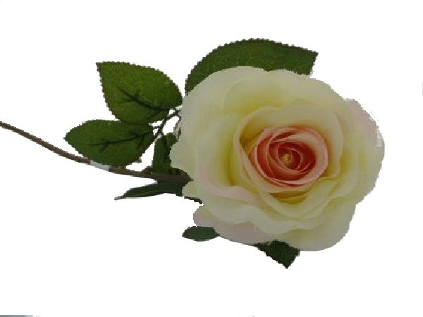 Rose Marissa Creme-Rosa 14606 154 Ø7,5cm L=40cm