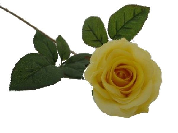 Rose Marissa GELB 14606 20 Ø7,5cm L=40cm