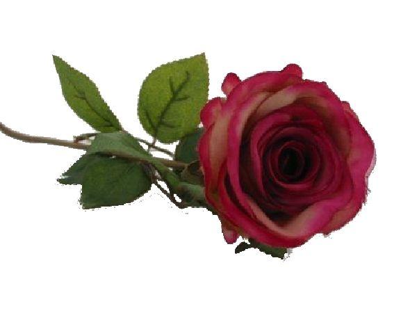 Rose Marissa MAUVE 14606-455 Ø7,5cm L=40cm