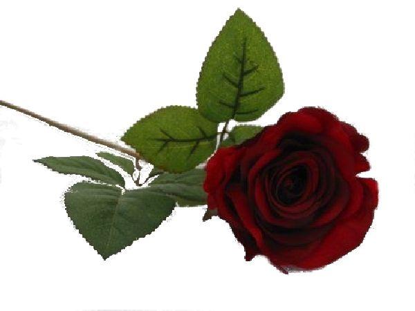 Rose Marissa DUNKELROT 14606 52 Ø7,5cm L=40cm