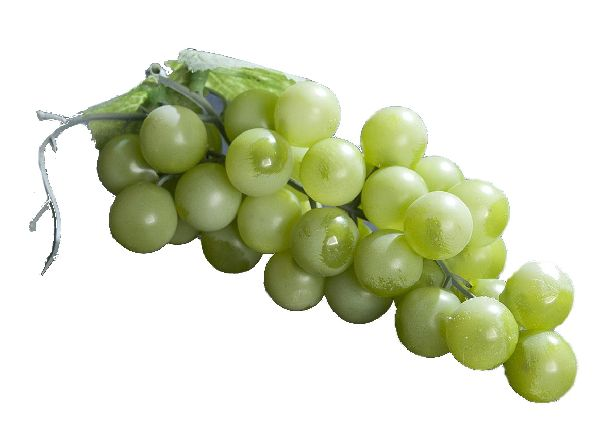 Weintrauben GRÜN 65065 L=12cm 48 Trauben 2 Blaetter Dekoobst