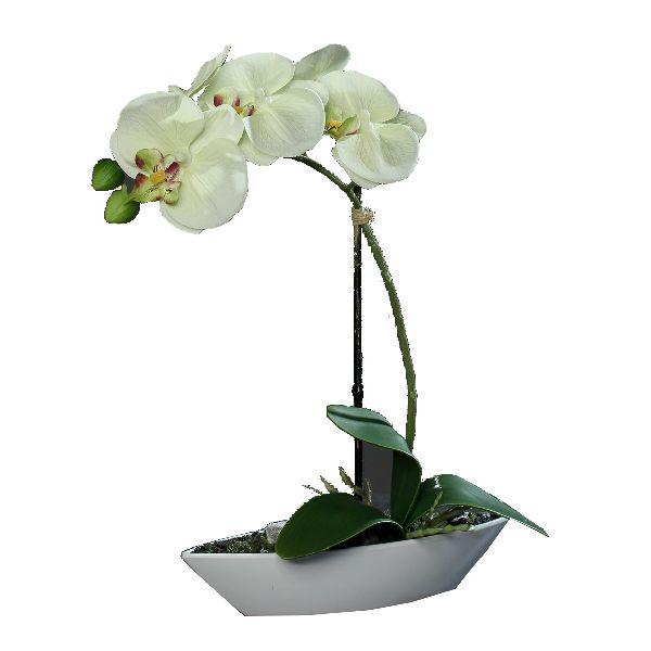 Orchideen Arrangement CREME-GRÜN Gesamtöhe ca. 30 cm in Kunststoffschale 60279