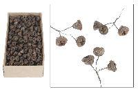 Eukalyptus angedrahtet NATUR 120 Stück 16912