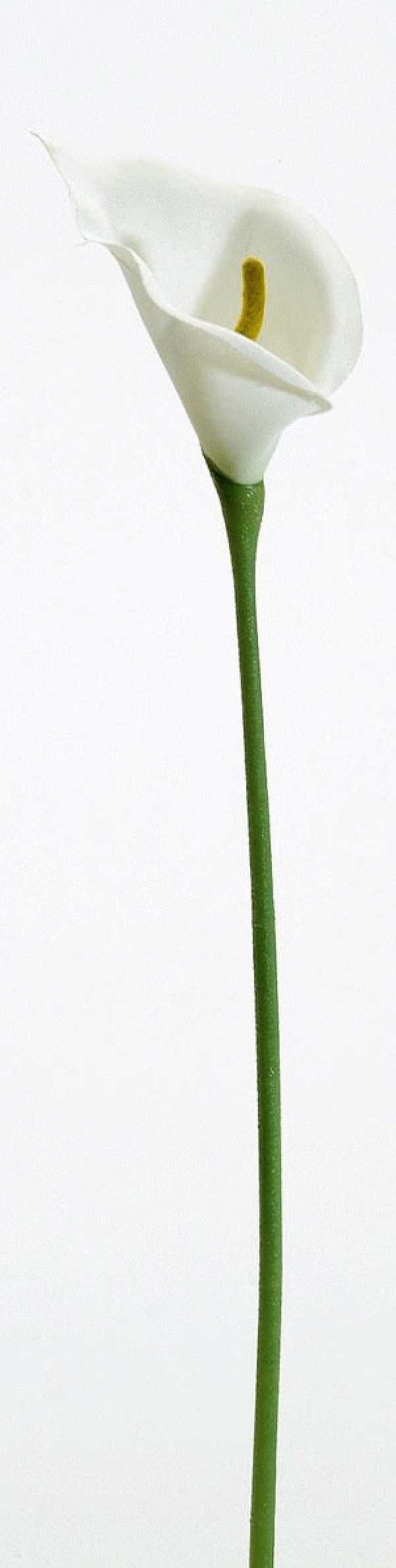 Calla CREME 02287 7cm Länge=40cm