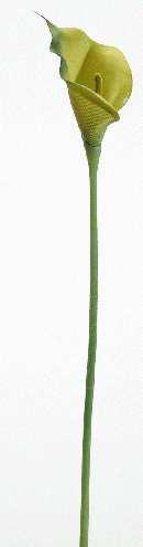 Calla GRÜN 02287 7cm Länge=40cm