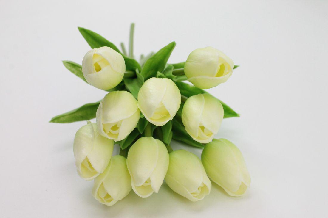 Tulpen CREME 86150 15 L:33cm 10Stück=1Bund