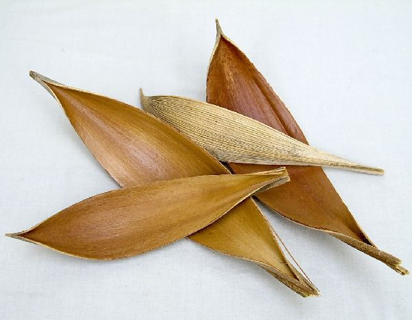 Cocosschale-Blatt SK Natur 100 St.groß ca. 20-30 cm